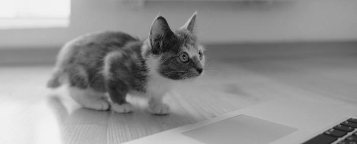 Katze läuft über Tastatur – Das Gelbe Sofa | Storytelling
